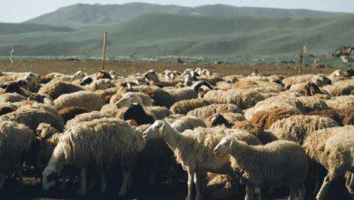 Photo of إجراءات لضبط تهريب الثروة الحيوانية، وتوقعات بإنخفاض أسعار اللحوم الحمراء!.